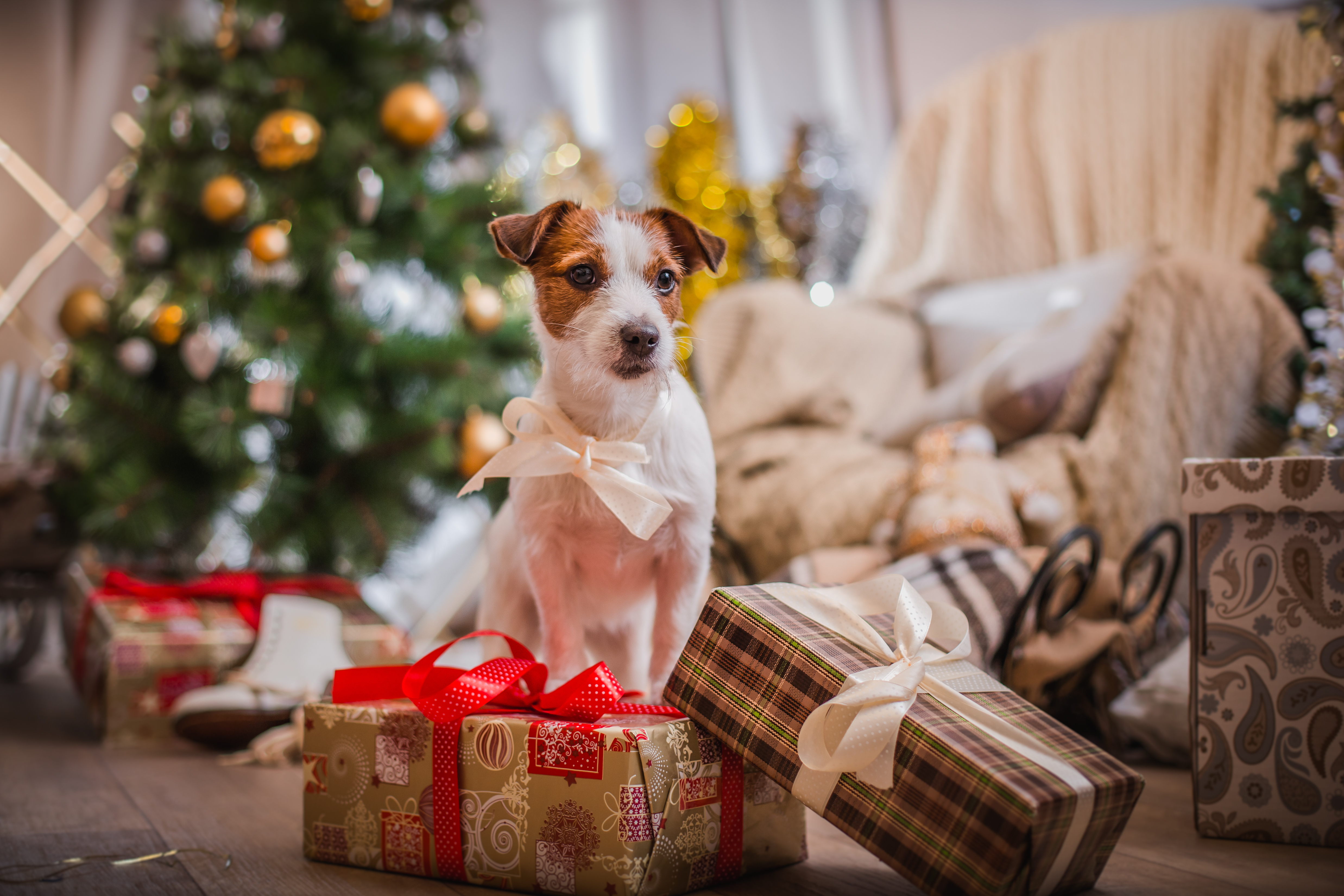 puppies and kittens are a great holiday gift