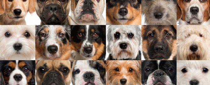 Stare into your dogs eyes feature image