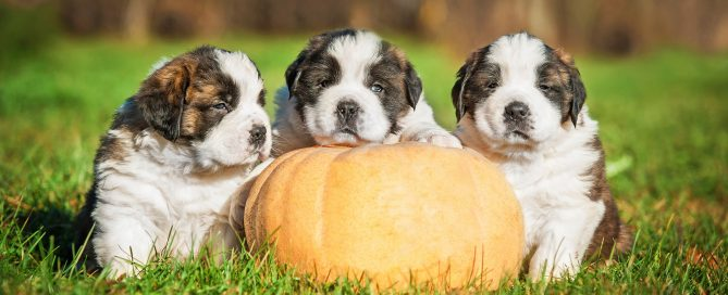 pumpkin and pets featured image