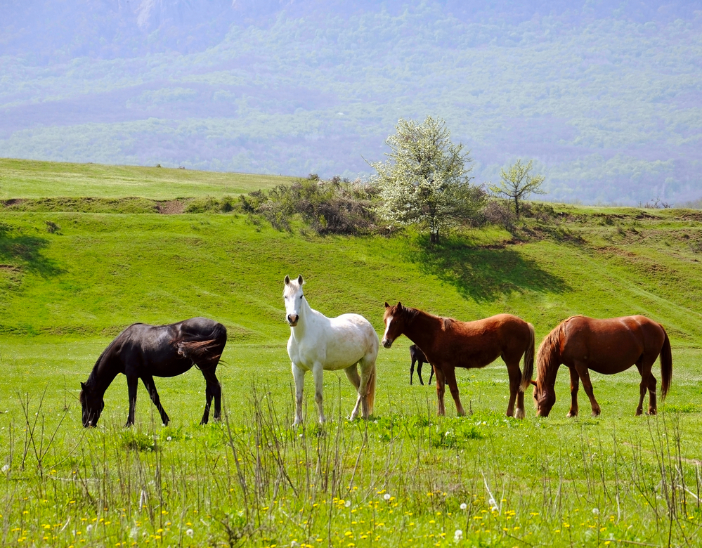 Should I Stall my Horse or Pasture Board?