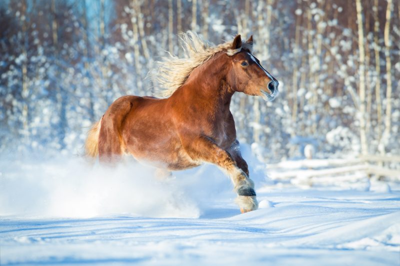 Surviving winter with horses
